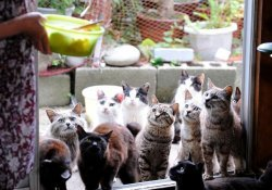 Nekojima - meet 20 cat islands in japan